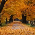 Grundlagenausdauer im Herbstwetter